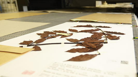 Herbarium sheet Digitization
